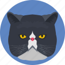 cat, cat face, feline, lynx, pet animal icon