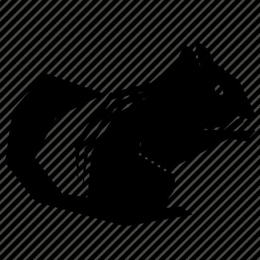 animal, chipmunk icon