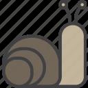 cochlea, slow, snail