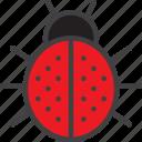 bug, ladybird, ladybug icon