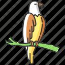 eagle, eagle icon, falcon, hawk icon