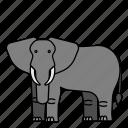animal, elephant, mammals, wild, zoo