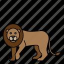 animal, lion, mammals, wild, zoo