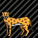 animal, cheetah, mammals, wild, zoo