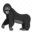 animal, gorilla, mammals, wild, zoo