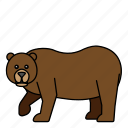 animal, bear, mammals, wild, zoo icon