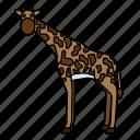 animal, giraffe, mammals, wild, zoo
