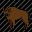 animal, bison, mammals, wild, zoo