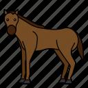 animal, horse, mammals, wild, zoo