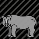 animal, mammals, rhino, rhinoceros, wild