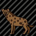 animal, hyena, mammals, wild, zoo