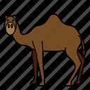 animal, camel, mammals, wild, zoo