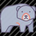animal, bear icon