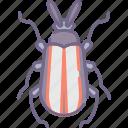 beetle, bug icon