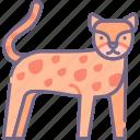 animal, big, cat, cheetah icon