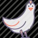 bird, chicken icon