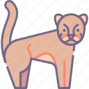 big, cat, cougar icon
