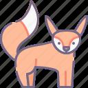 animal, fox