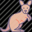 kangaroo, australia, wild
