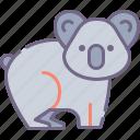 bear, koala, australia