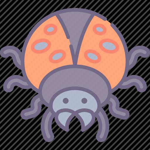 bug, insect, ladybug icon