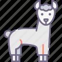 llama, alpaca, wool