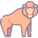 ape, monkey, orangutan icon
