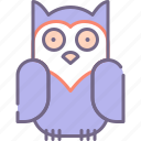 bird, owl, night