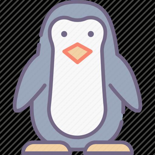 bird, penguin, zoo icon