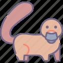 australia, endemic, platypus icon