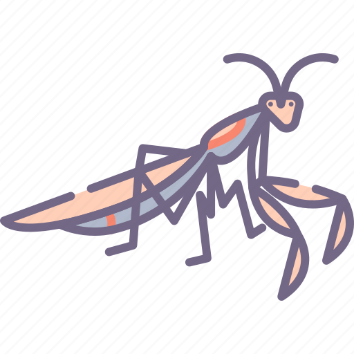 Bug, mantis, praying icon - Download on Iconfinder