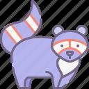 animal, racoon icon