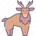 animal, christmas, reindeer