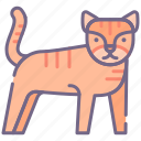 big, cat, tiger icon