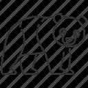 bear, chinese, panda, panda icon