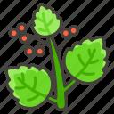 1f33f, herb