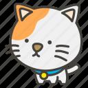 a, cat, 1f408