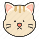 cat, face icon