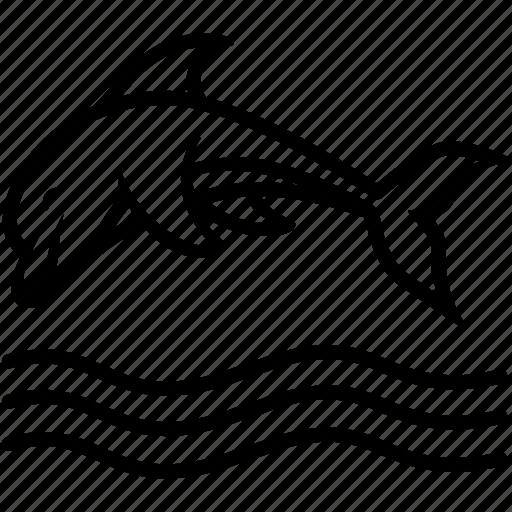 beluga, dolphin, fish, mammal, marine icon