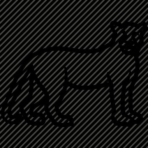 cat, cougar, jaguar, jungle, leopard, lion icon