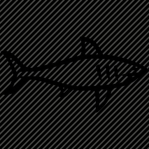 chordate, fish, predator, shark, squalus icon