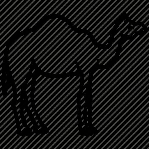 arabian, camel, dromedary, mammal, ruminant icon