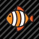 animal, fish, orange, stripped