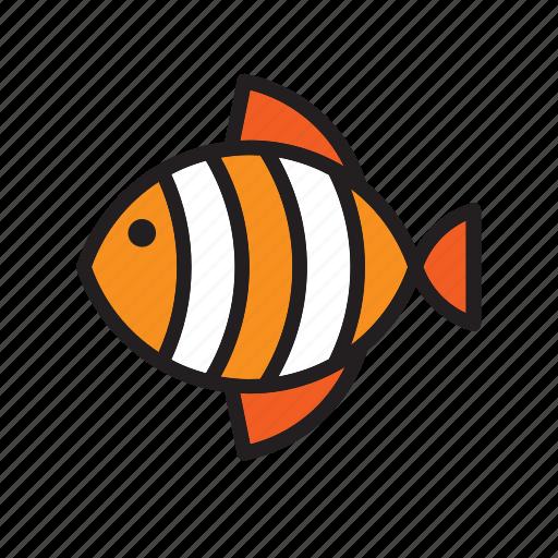animal, fish, orange, stripped icon
