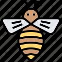 animal, apiary, bee, honey, insert