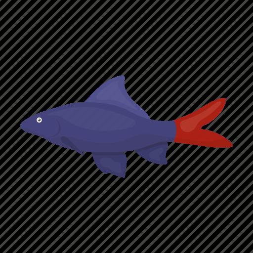 Animal, aquarium, exotic, fish icon - Download on Iconfinder
