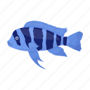 animal, aquarium, exotic, fish icon