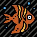 angelfish, animal, aquatic, life, sea icon