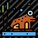 amphibian, animal, frog, wildlife