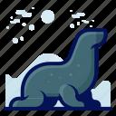 animals, aquatic, nautical, ocean, seal, wildlife